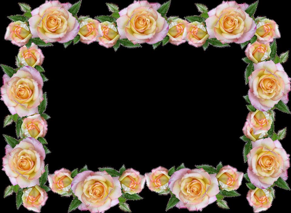 Frame, Border, Peace Rose, Decorative