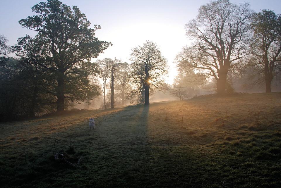 Misty, Morning, Sunrise, Trees, Serene, Peaceful, Fog