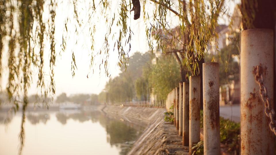 Peaceful, Lake, Tree, Lake Side, Water