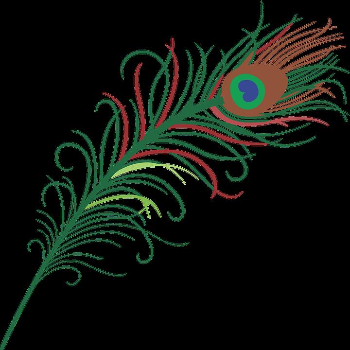 Peacock, Eye, Feather