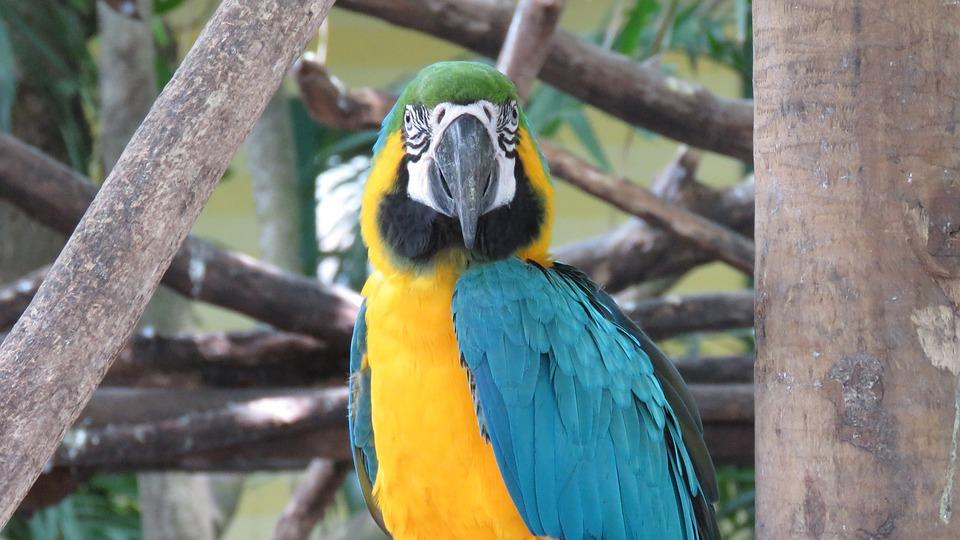 Macaw, Ave, Animals, Nature, Colorful, Peak, Plumage