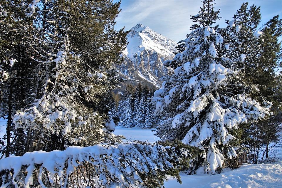 Peak, Alpine, Forest, View, Snow, White, Snowy, Winter