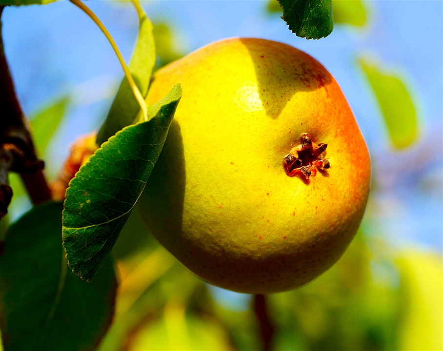 Pear, Fruit, Fruits, Healthy