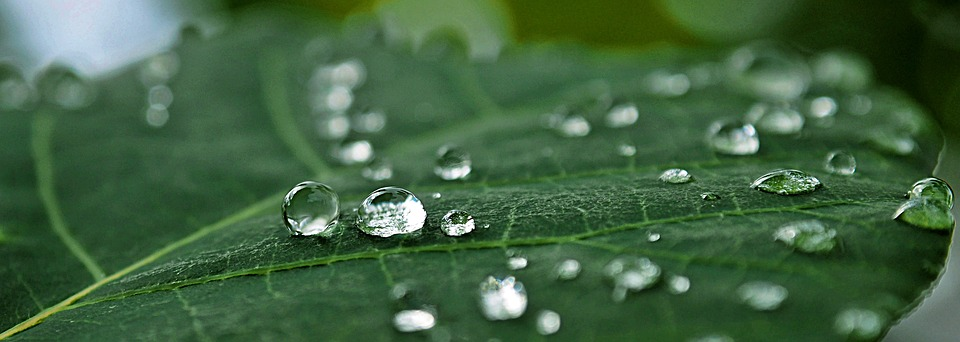 Dew, Pearl, Rain, Leaf, Drop Of Water, Water, Summer