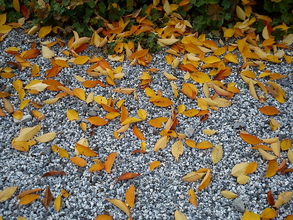 Leaves, Pebble, Autumn, Dry, Golden, Steinchen