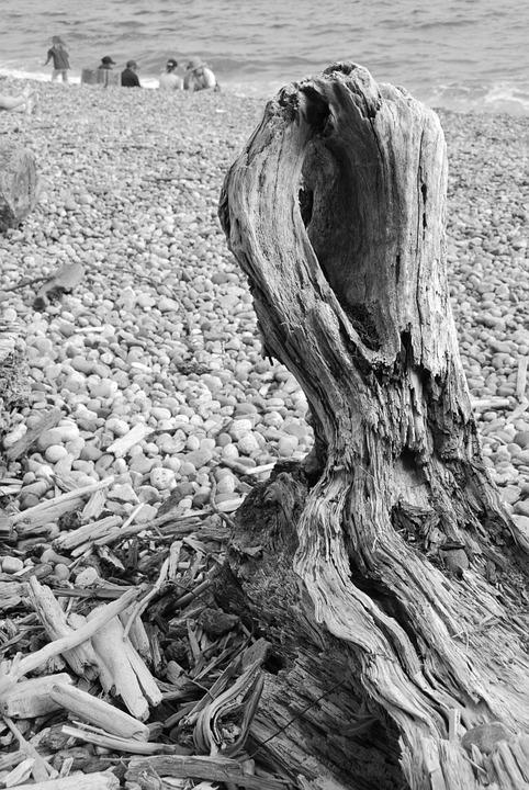 Beach, Ocean, Wood, Trunk, Pebbles, Black White