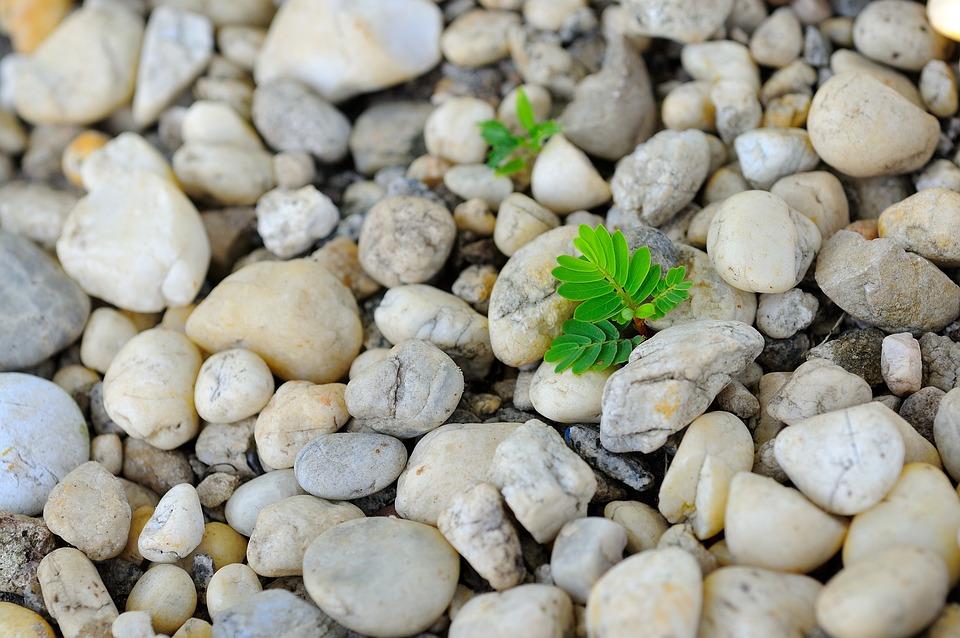 Plants, Nature, Vitality, Strong, Pebbles, Green