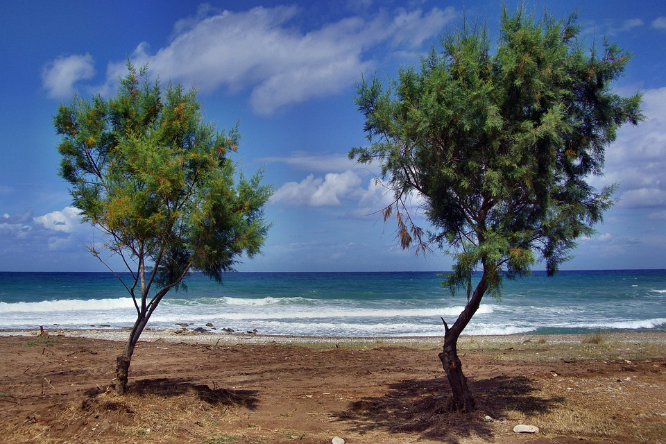 Trees, Beach, Sea, Peloponnese