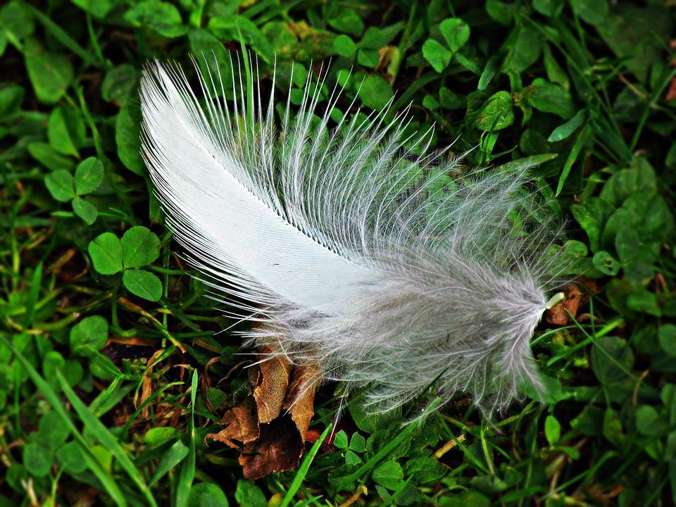 A Feather, Grass, Fly, Pen, Lightness
