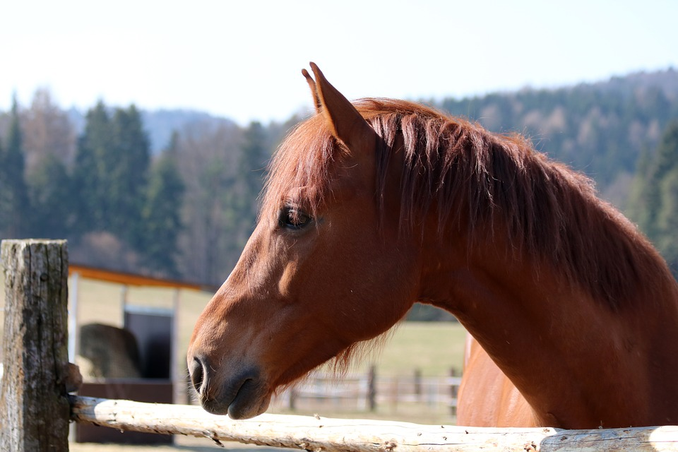 Brown Horse, Neck, Animal, Pen, Mane