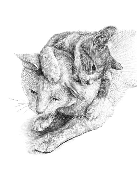 Cats, Artwork, Pencil Drawing, Pet, Cute, Portrait