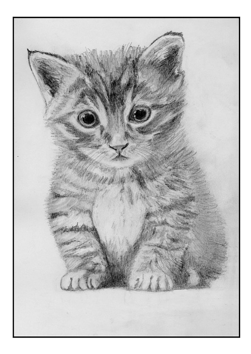 Cat, Feline, Drawing, Pencil, Illustration, Animal