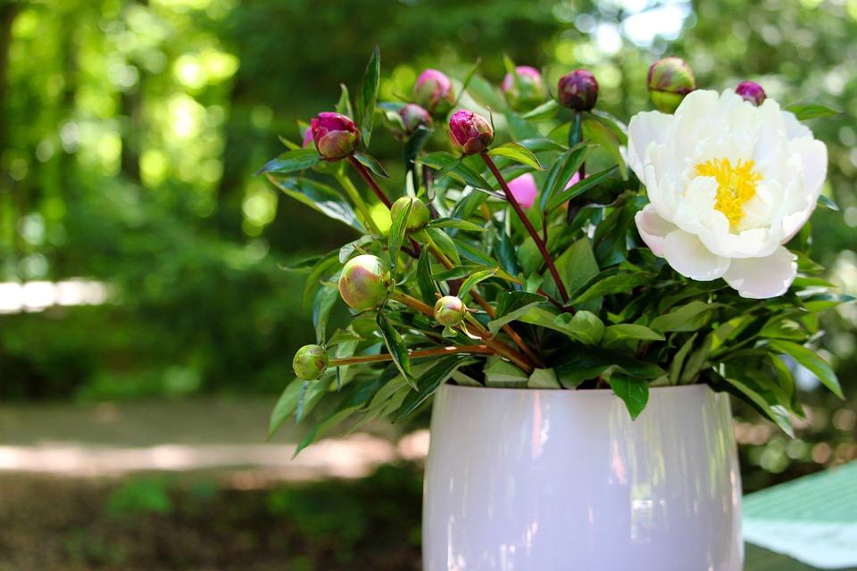 Bouquet, Vase, Peony, Flowers, Vintage, Blossom, Bloom