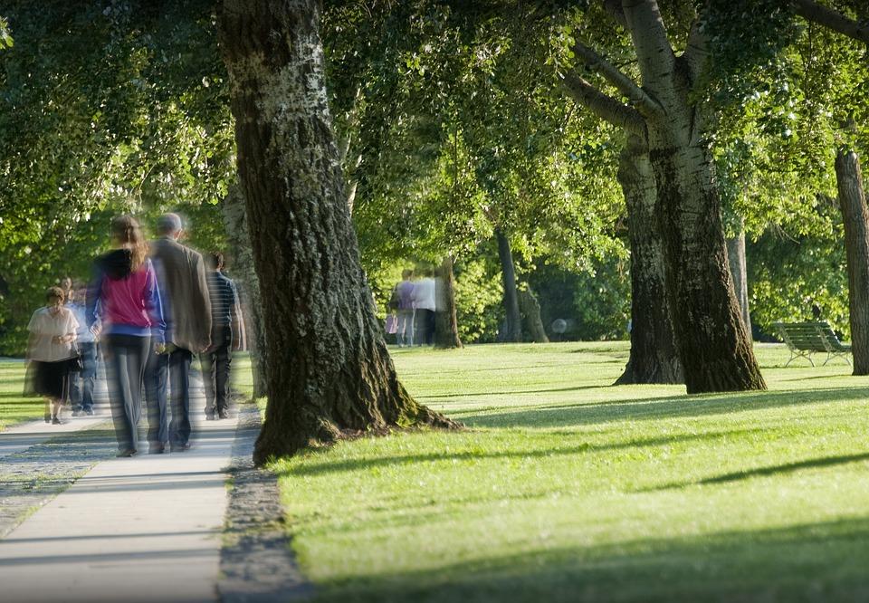 Park, People, Hiking, Strolling, Wandering, Trees