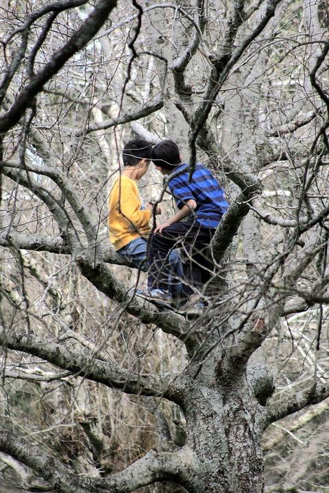 Childhood, Tree, Boys, People, Outdoors, Nature