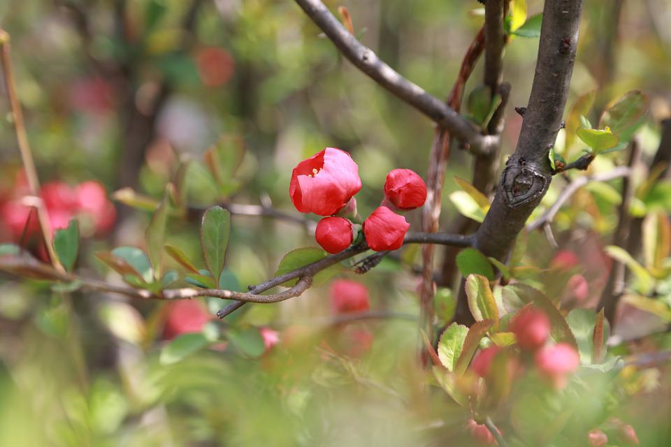 People Tree, Flowers, The Phone, Bud, Plants, Nature