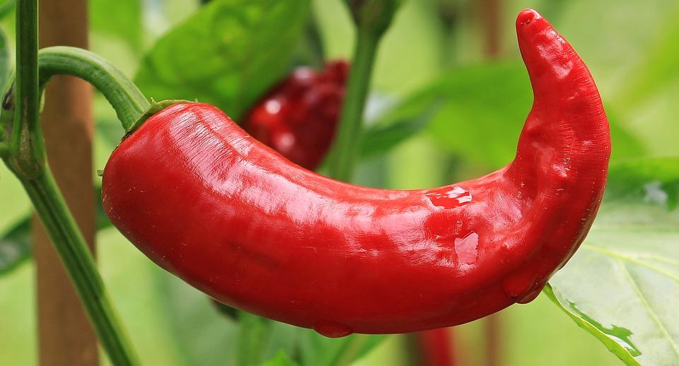 Pepperoni, Paprika, Nachtschattengewächs, Red Pepper