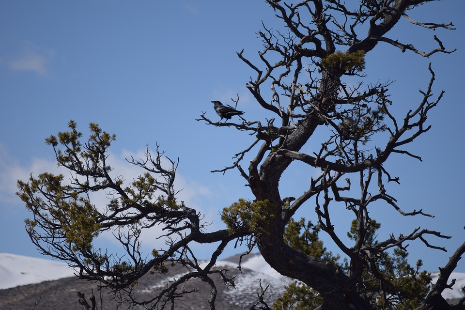 Raven, Perched, Tree, Branch, Nature, Black, Wildlife