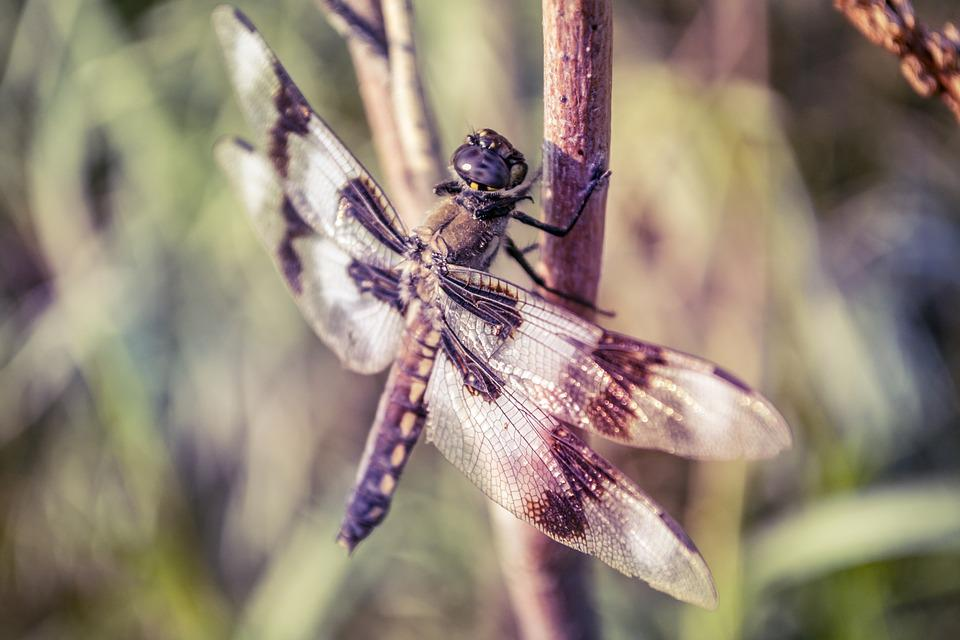Dragonfly, Perch, Dragon, Fly, Insect, Perched, Nature
