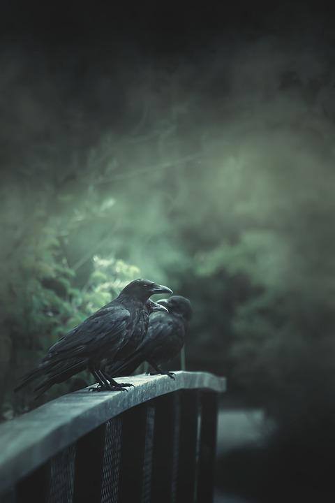 Raven, Bridge, Horror, Birds, Animals, Perched, Fog