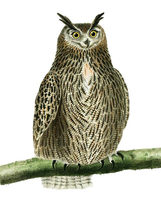 Owl, Bird, Perched, Perched Owl, Bird Of Prey