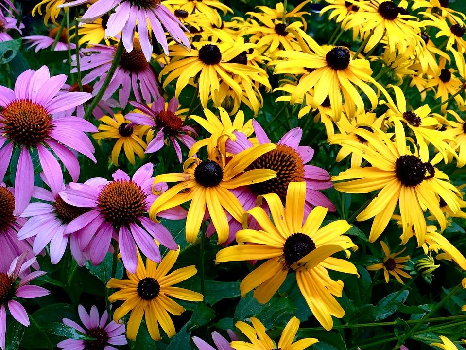 Free photo perennials flowers garden max pixel flowers perennials garden mightylinksfo