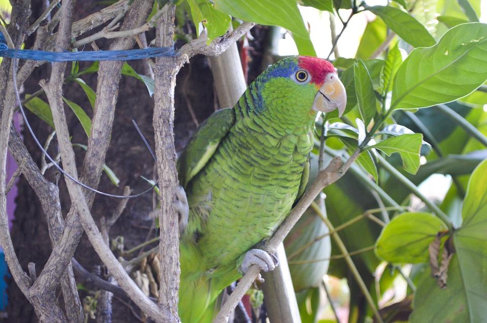 Reptiles: Color Tropical Lizard Reptiles Green Animals Photo ...