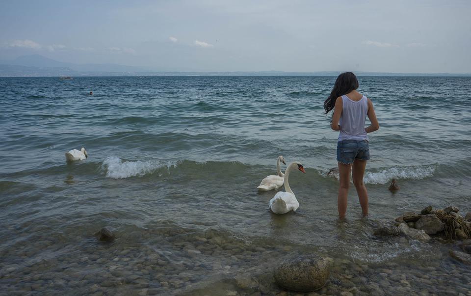 Person, Feeding, Girl, Swans, Birds, Duck, Nature
