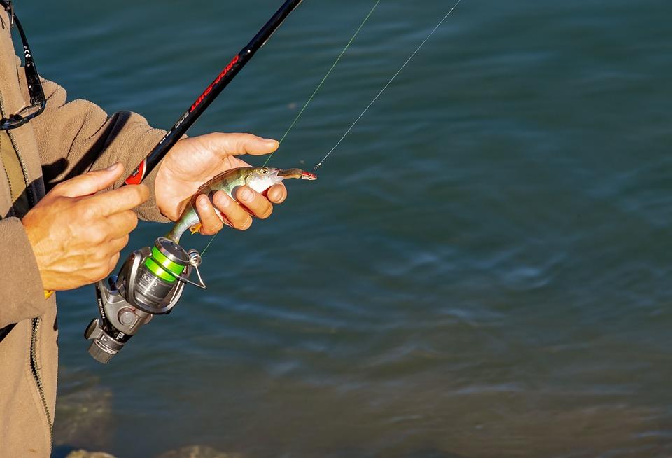 Angler, Man, Human, Person, Fishing Rod, Fishhook