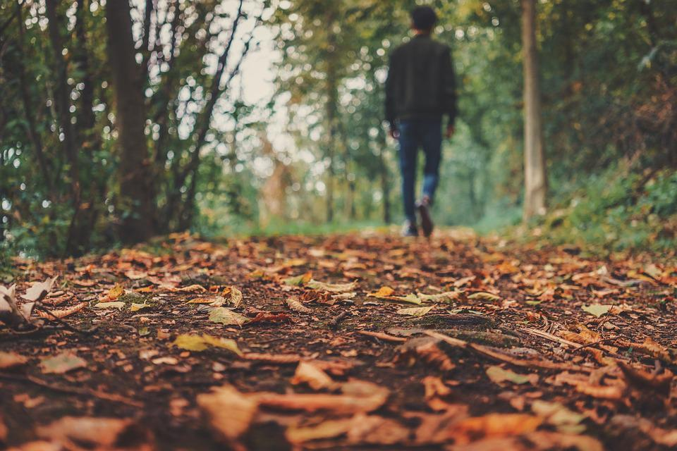Autumn, Fall, Ground, Leaves, Man, Outdoors, Person