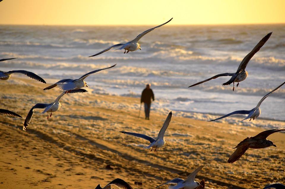Man, Person, Walking, Sunset, Seagull, Beach, Sea