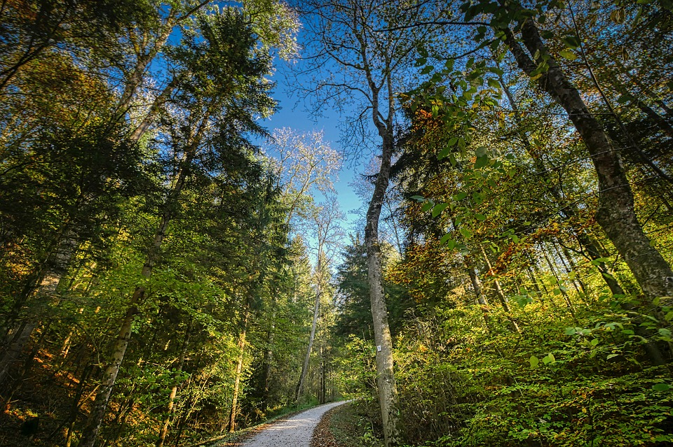 Forest, Sky, Perspective, Nature, Landscape, Trees