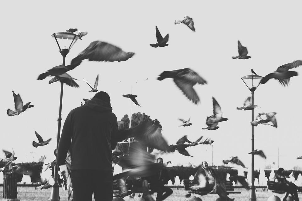 Birds, Street, Animal, Perspective, City, Travel