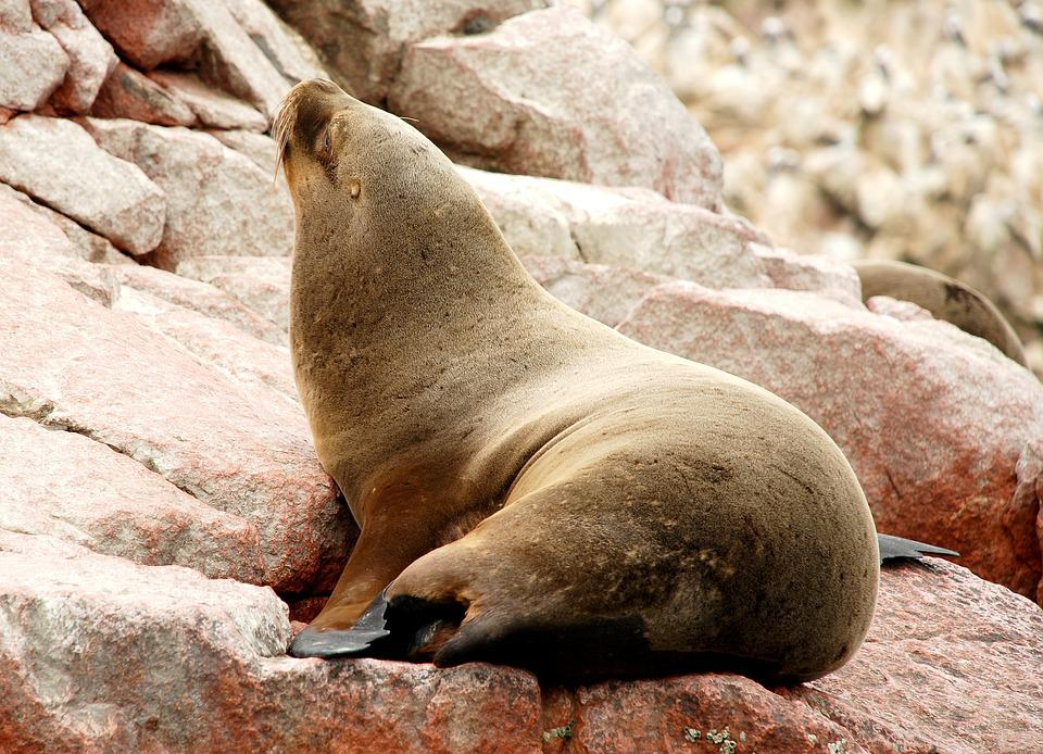 Paracas, Ballestas Islands, National Reserve, Peru
