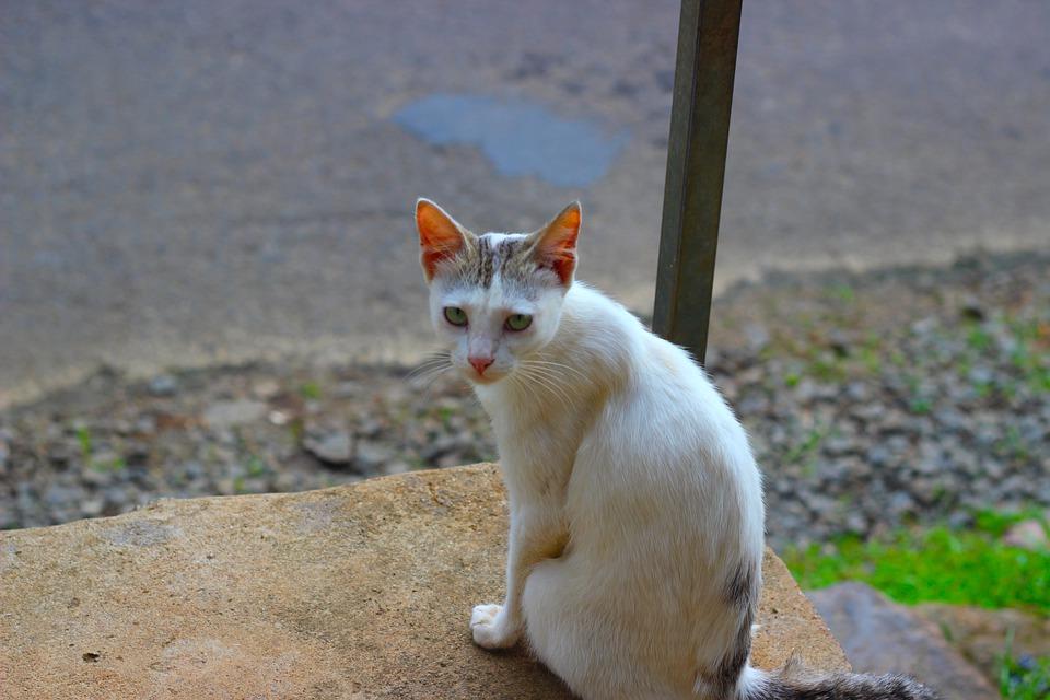 Cat, Pet, Kitten, Animal, Kitty, Curious, Adorable
