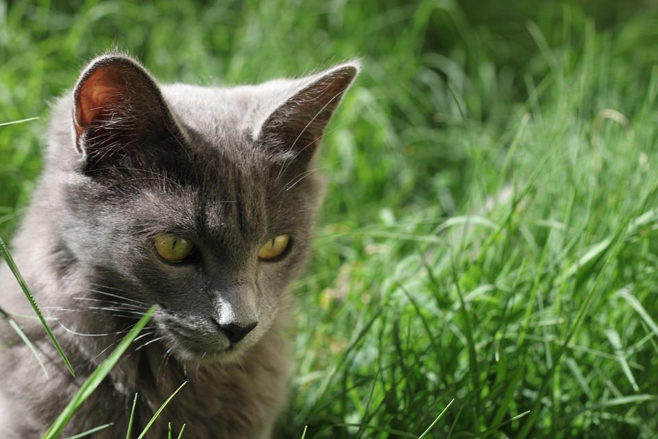 Cat, Animal, Pet, Animals, Puppy, Mammals