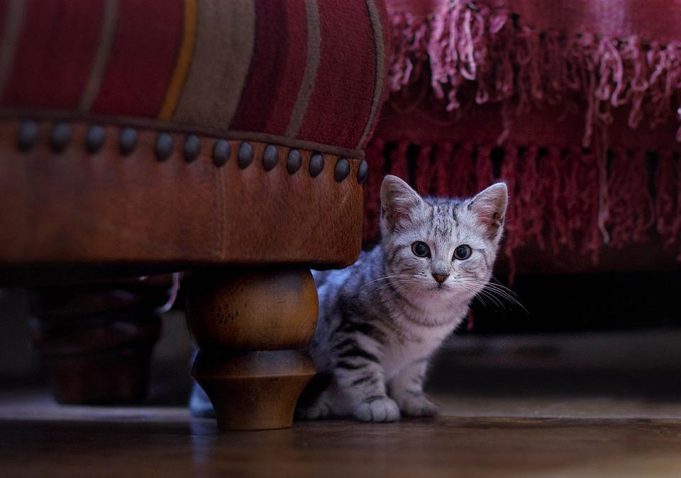 Kitten, Cat, Cute, Animal, Kitty, Feline, Pet, Domestic