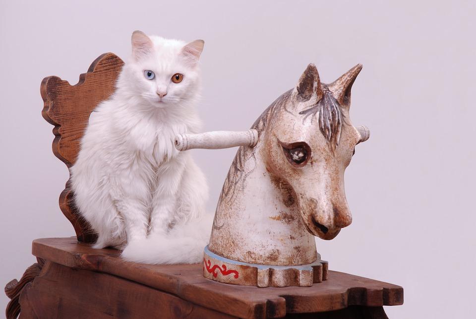 Cat, Blu, Rocking Horse, Animal, Domestic, Pet, Sit