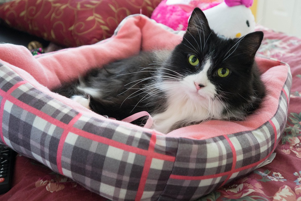 Cat, Kitty, Pet, Feline, Animal, Pink, Happy
