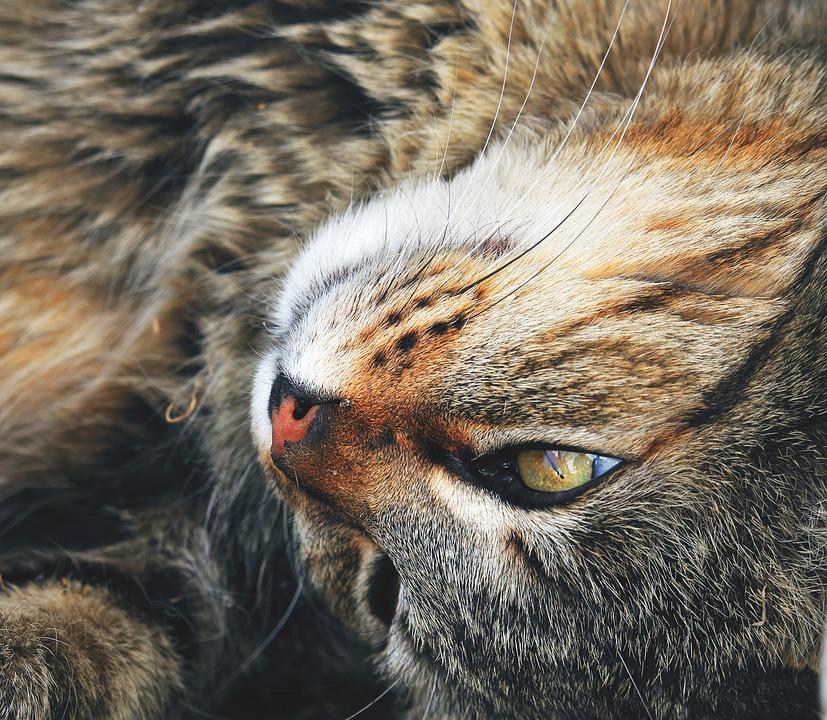 Cat, Look, Pets, Eyes, Feline, Animal, Pet, Animals