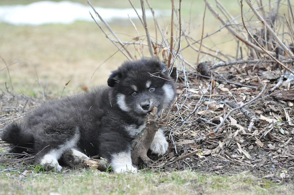 Dog, Puppy, Animals, Pet, Cute