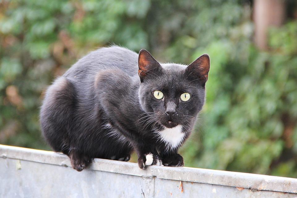 Cat, Black, Black Cat, Pet, Fence, Cat's Eyes, Balance
