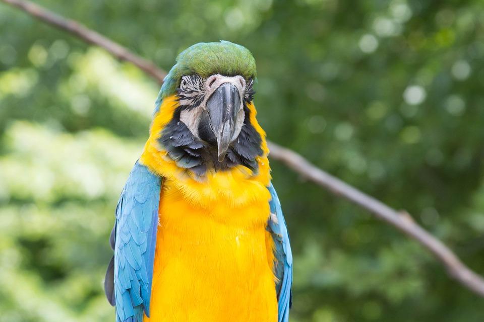 Parrot, Bird, Animal, Pet, Colorful
