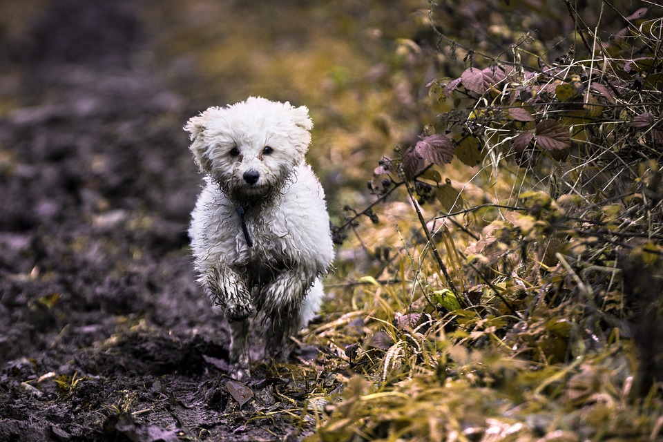 Dog, Puppy, Pet, Animal, Cute, White, Canine, Breed