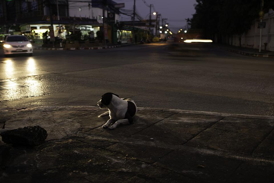Dog, Street, Night, Pet, Animal, Canine, Car, Light