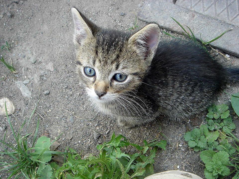 Kitten, Cub, View, Caress, Home, Pet