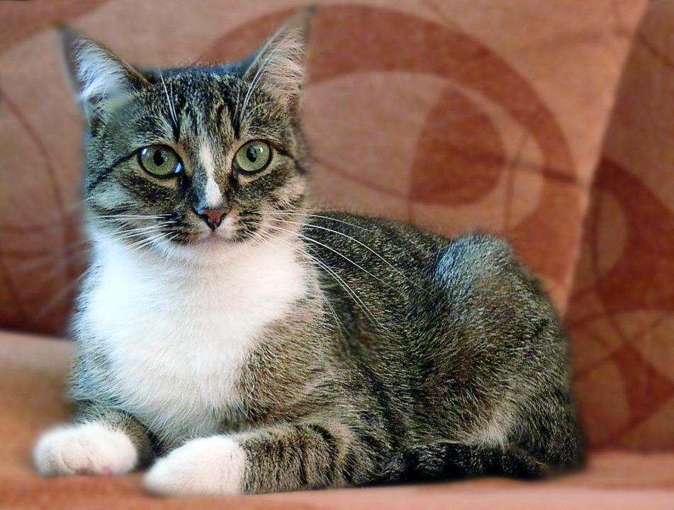 Cat, Pets, Animals, View, Cat Eyes, Pet, Portrait, Home