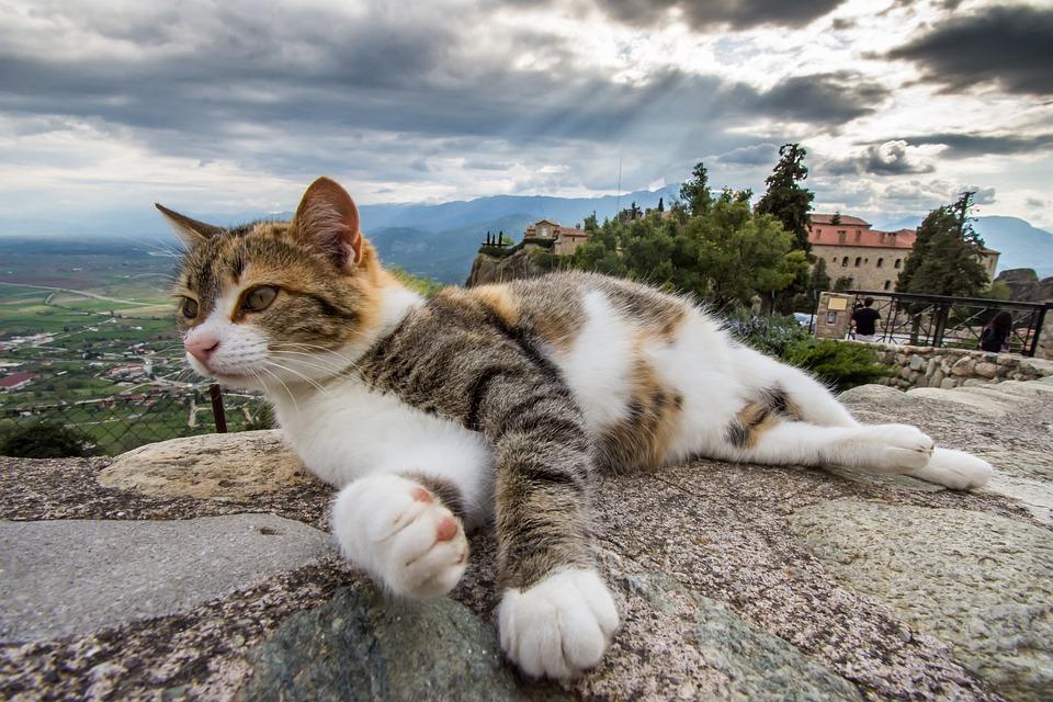 Animal, Nature, Outdoors, Cute, Cat, Pet, Beautiful