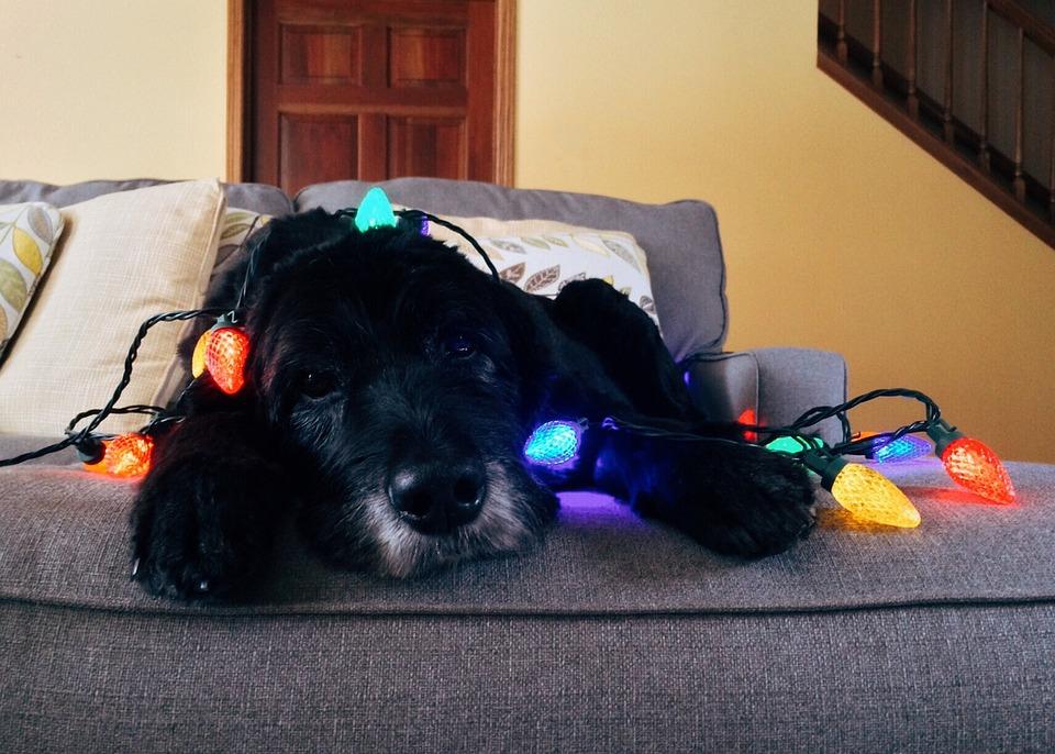 Dog, Christmas, Pet, Christmas Dog, Xmas, Holiday