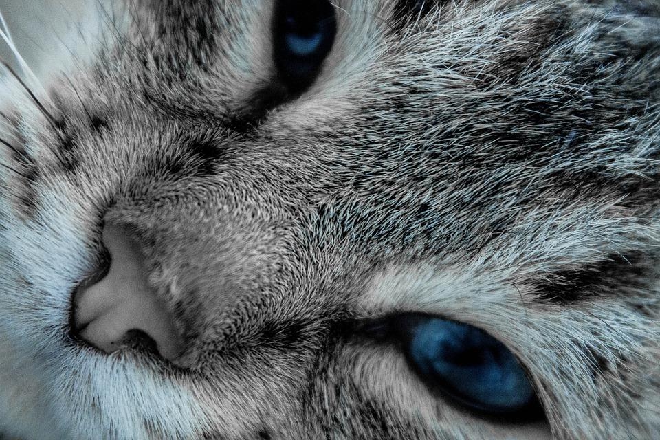 Cat, Eyes, Pet, Cat Eyes, Cats, Cat Person, Closeup